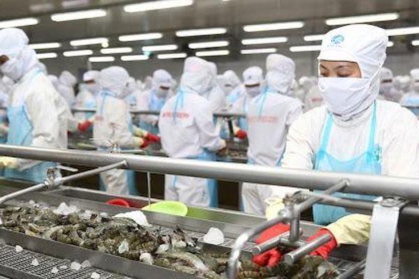 Bộ Công Thương: Mỹ bỏ áp dụng thuế chống bán phá với tôm Minh Phú là quyết định khách quan, công bằng