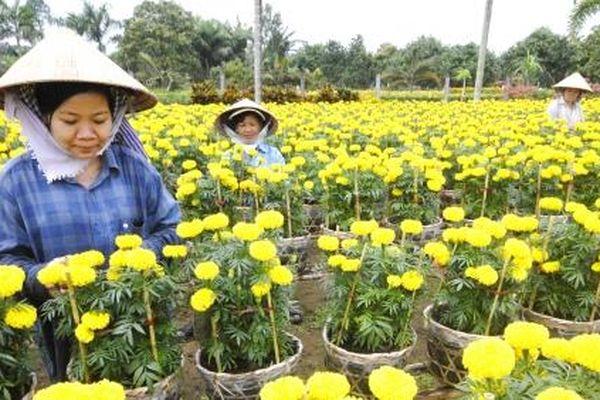 Sản xuất hoa kiểng công nghệ cao gắn du lịch sinh thái