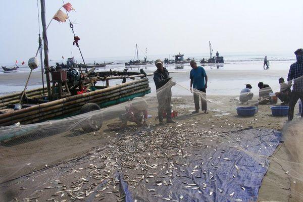 Ngư dân Thanh Hóa 'mở cửa biển', ra khơi đánh bắt đầu năm