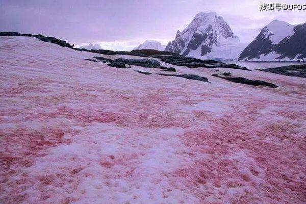 'Tuyết dưa hấu' lại xuất hiện, Nam Cực chìm trong màu đỏ
