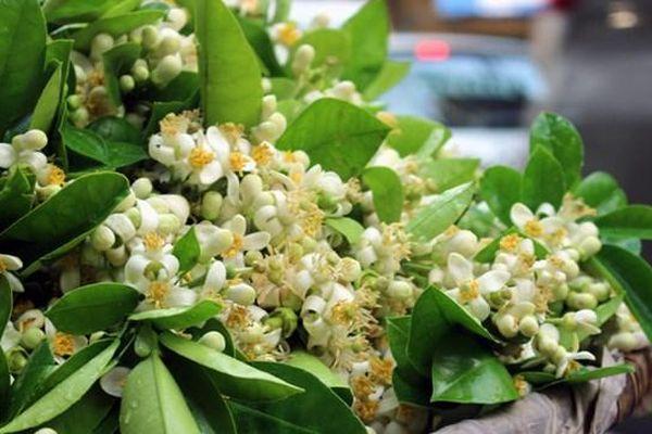 Hoa bưởi ngập tràn khắp phố đón Rằm tháng Giêng