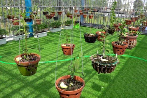 Vườn lan đột biến quý hiếm ở miền Tây