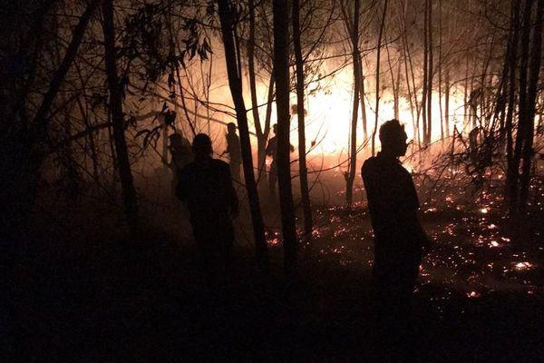 Quảng Nam: 'Bà hỏa' thiêu rụi gần 50ha rừng trồng ven biển