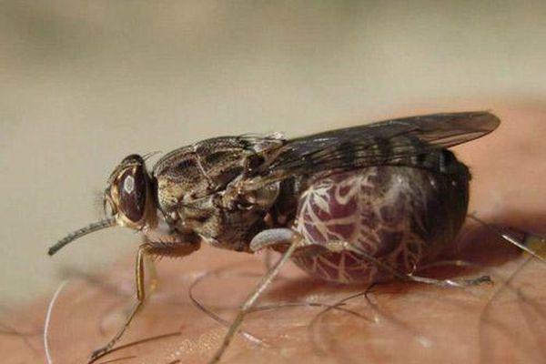 'Điểm danh' 10 loài côn trùng nguy hiểm nhất thế giới