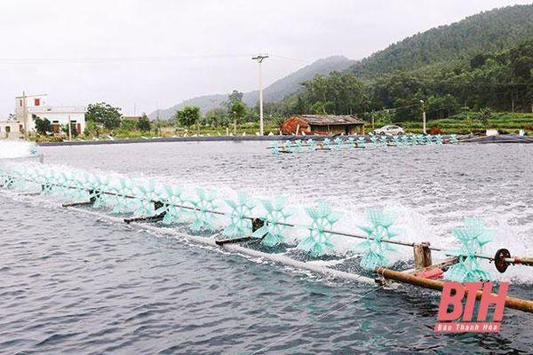 Huyện Hoằng Hóa tích cực chuẩn bị các điều kiện thả nuôi tôm vụ xuân hè 2021