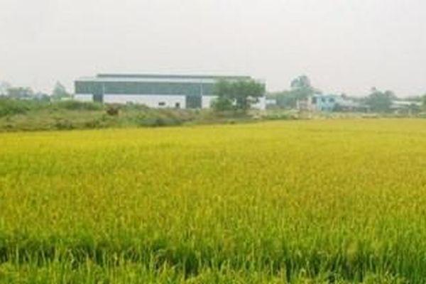 Chuyển mục đích sử dụng đất tại Long An