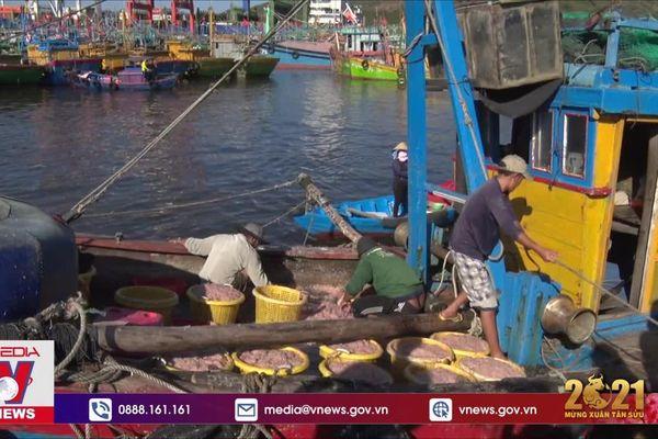 Đầu năm ngư dân Bình Định trúng ruốc biển