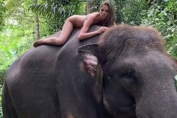 Chụp ảnh khỏa thân cùng loài voi sắp tuyệt chủng, người mẫu 22 tuổi phải lên tiếng xin lỗi