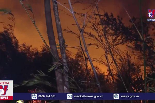 Thiệt hại cháy rừng ở Lai Châu