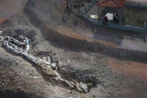 Phát hiện cây hóa thạch siêu quý hiếm 20 triệu năm tuổi