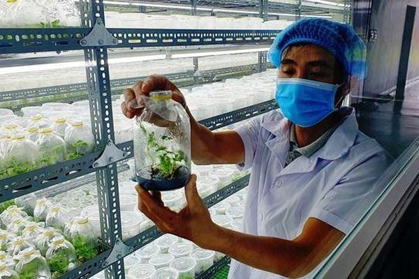 Đẩy mạnh công nghệ 4.0 vào bảo tồn phát triển cây sâm quý Ngọc Linh