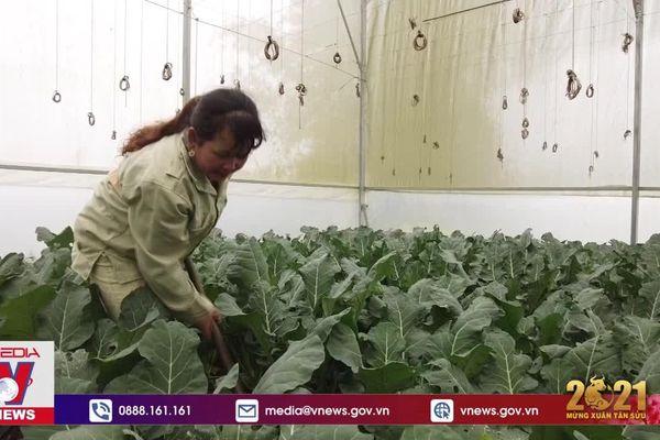 Vùng cao Vân Hồ sản xuất rau màu theo hướng hàng hóa