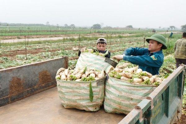 Chuyện ''giải cứu'' nông sản ở Mê Linh và những thông tin ''nói lấy được''