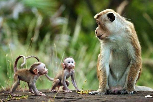 Toàn tỉnh Khánh Hòa có 54 cơ sở nuôi động vật hoang dã
