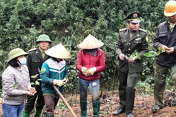 Hưởng ứng chương trình trồng một tỷ cây xanh