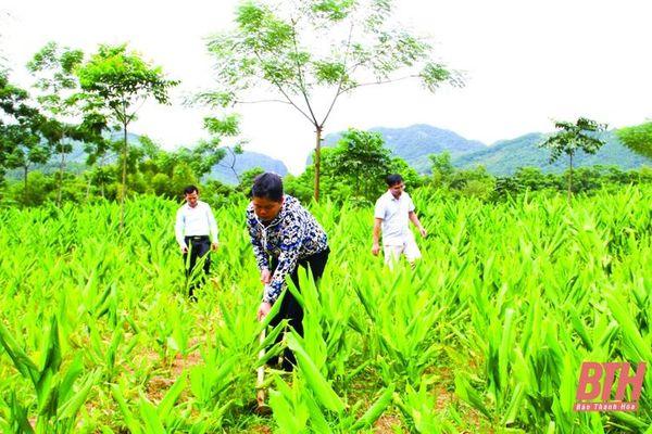 Bảo tồn và phát triển cây dược liệu