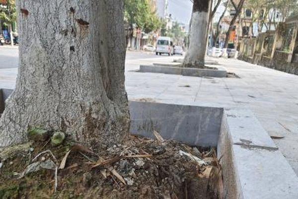 Chặt đẽo gốc cây để ốp đá vỉa hè… gây mất an toàn