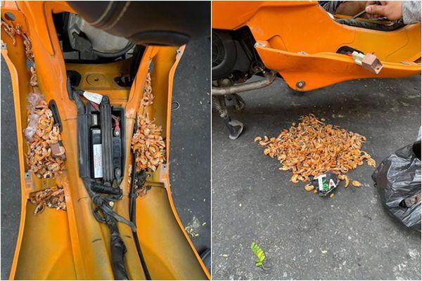 Mở xe máy ra sửa, chủ nhân 'rụng rời' với thứ bên trong