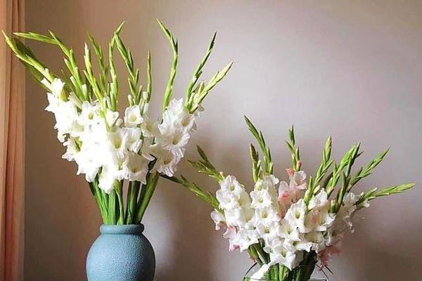 Trổ tài cắm hoa lay ơn theo cách 'vạn người mê' của mẹ 8X