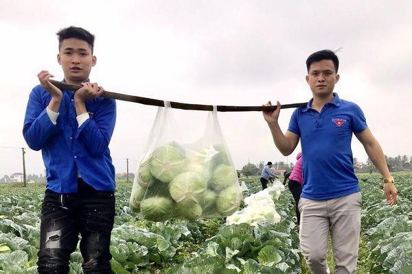 Đoàn thanh niên giải cứu hàng tấn rau xanh cho người dân huyện Diễn Châu
