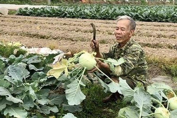 Lại câu chuyện 'giải cứu' nông sản
