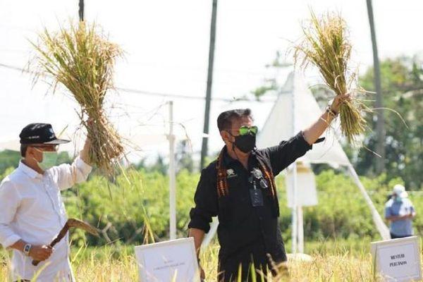 Củng cố nền kinh tế giữa đại dịch Covid-19, Indonesia phát triển mô hình du lịch nông nghiệp