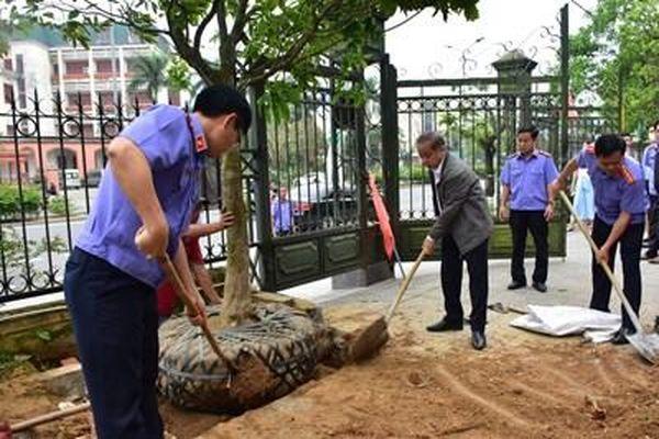 Thừa Thiên Huế phát động phong trào 'Mai vàng trước ngõ'