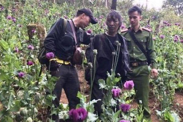 Liên tiếp phát hiện nhiều vụ trồng cây chứa chất ma túy