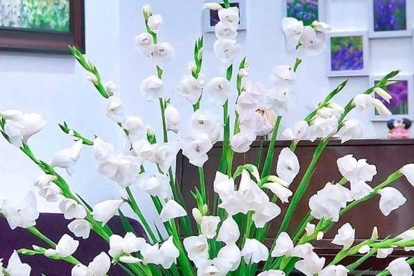 Điều ít biết về loại hoa trắng từng được các cô dâu cầm cách đây 30-40 năm, đám cưới nào cũng không thể thiếu
