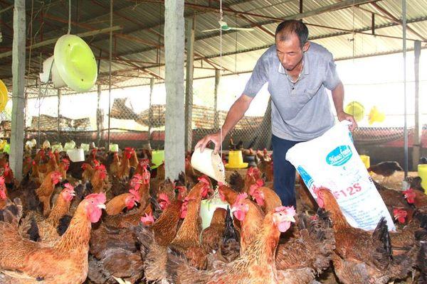Gắn sản xuất nông sản với tiêu thụ