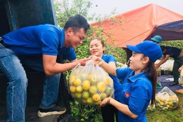 Tuổi trẻ Nghệ An giải cứu hàng tấn quýt cho người dân