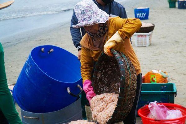 Ngư dân Đà Nẵng trúng đậm mùa ruốc đầu năm