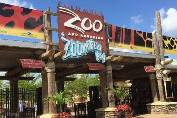 Nhân viên vườn thú bị báo tân công vì ám mùi hươu cao cổ