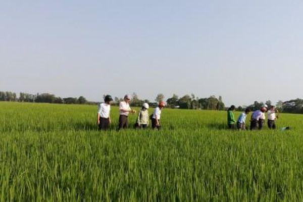 28.200 tỉ đồng đầu tư cho công trình, dự án nông nghiệp - nông thôn ĐBSCL