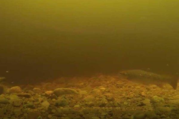 Giải mã đoạn video về sự xuất hiện của quái vật hồ Loch Ness: Danh tính của Nessie được hé lộ