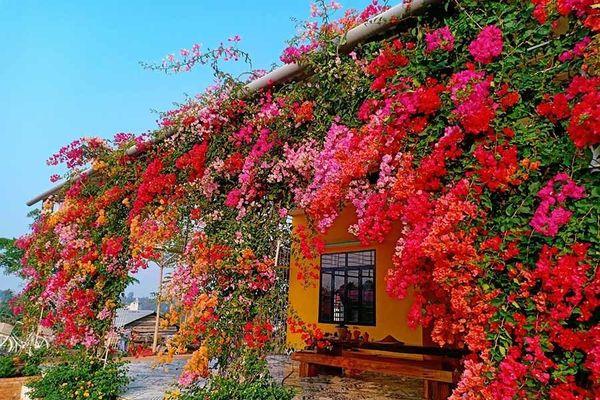 9X Đắk Lắk trồng vườn hoa hơn 2.000m2