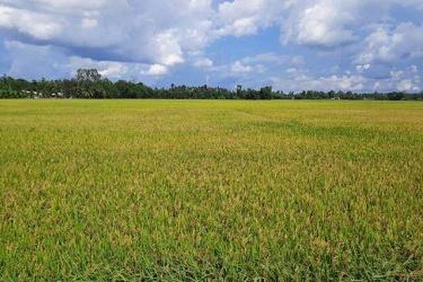 Đồng Tháp xác định 7 lĩnh vực ưu tiên thu hút đầu tư vào nông nghiệp