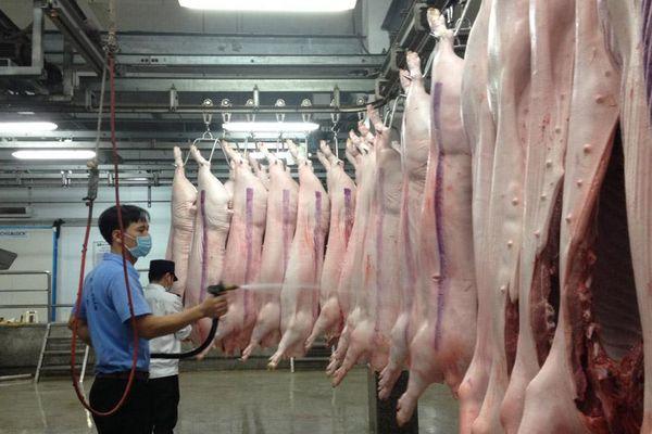 Siết chặt quản lý cơ sở giết mổ lợn