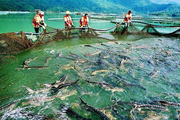 Những bất thường trong nhập khẩu cá tầm
