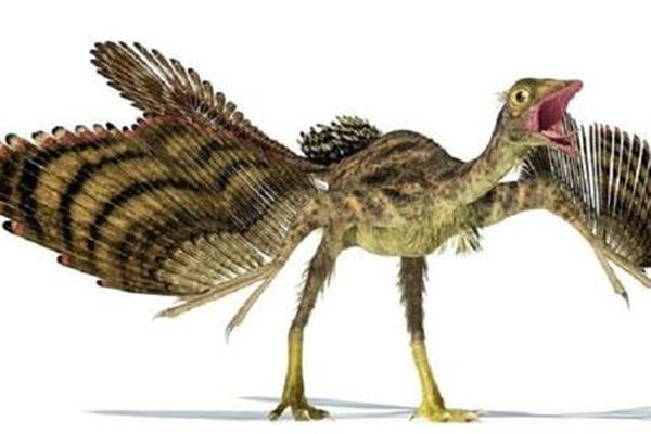 Hóa thạch lông vũ gây tranh cãi của khủng long Archaeopteryx