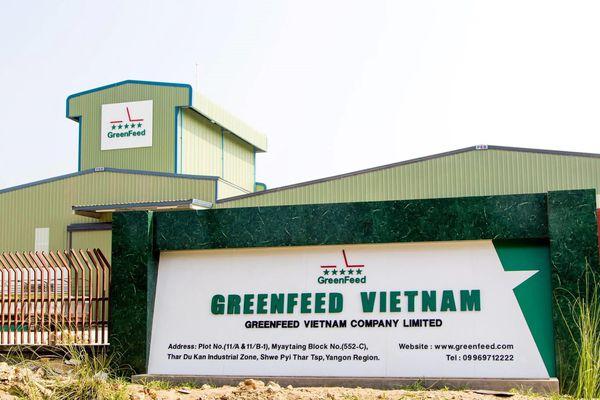 Greenfeed Việt Nam: DN thức ăn chăn nuôi mà IFC muốn rót 180 triệu USD có gì hấp dẫn?