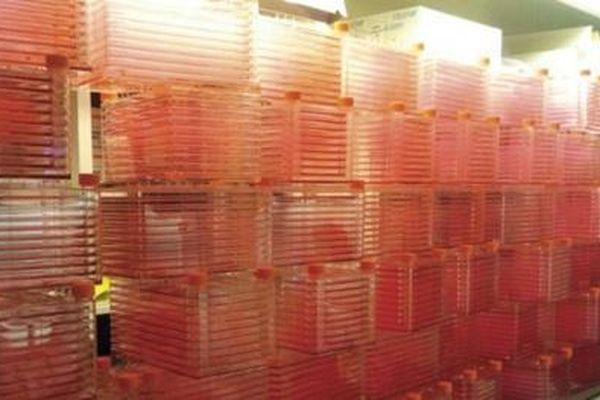 Công ty khởi nghiệp nhận 47 triệu USD để sản xuất thịt tổng hợp