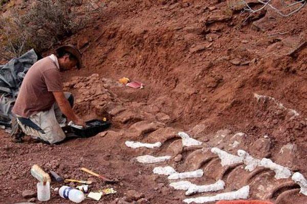 Bộ xương dài 20 m của loài khủng long mới ở Argentina
