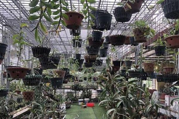 Chủ vườn lan lắp thêm camera báo động sau khi bị trộm
