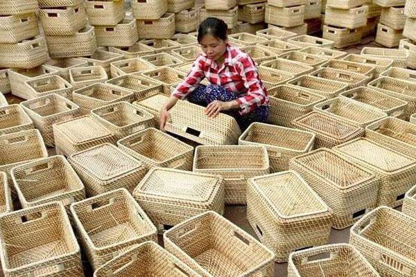 Người xuất khẩu bèo, cỏ tây tới 40 nước
