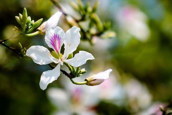 Những loài hoa biểu tượng ở các địa phương