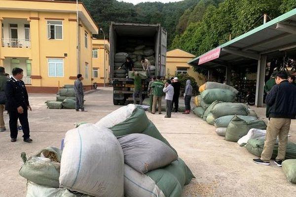 Lật tẩy cách thức tinh vi đưa hàng nghìn tấn thuốc bắc lậu vào Việt Nam