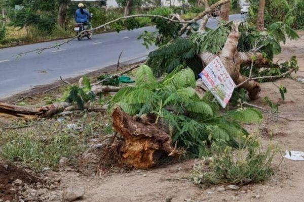 Cây phượng đổ đè chết người: Kiểm tra toàn diện cây xanh nội ô TP Sóc Trăng