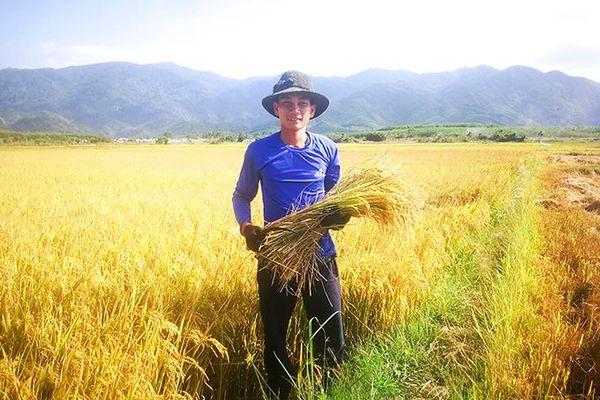 Khởi nghiệp từ gạo quê