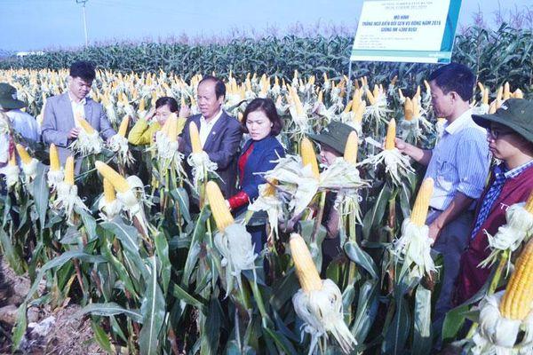 Nhiều lợi ích từ ứng dụng công nghệ sinh học trong phát triển nông nghiệp